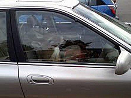 Deer in car 1